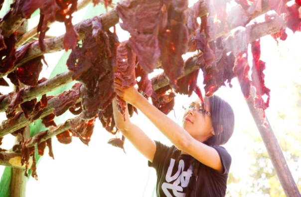 Raylene Gibot hangs caribou meat during a dry meat making workshop in Fort Chipewyan on Sept. 13, 2013. Credit: Ryan Jackson, Edmonton Journal.