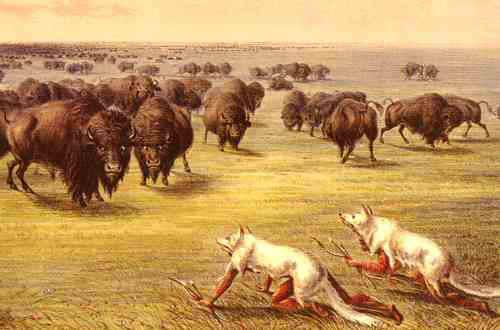 Buffalo hunting 1