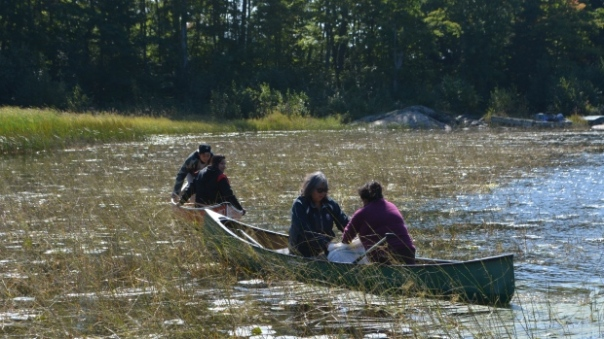 People from Wikwemikong harvest wild rice near Killary in northern Ontario.