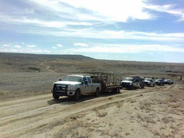 Hopi Rangers arrested two individuals and impounded 120 sheep this morning at the homesite of Tom and Etta Begay in Red Willow Springs.