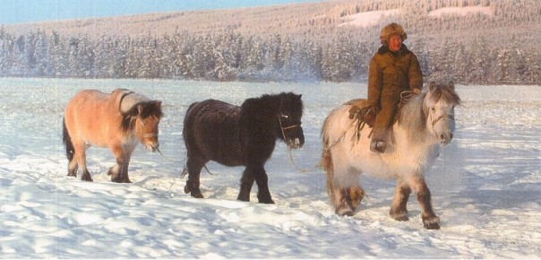 Yakut with horses specially adapted to the Siberian winters.