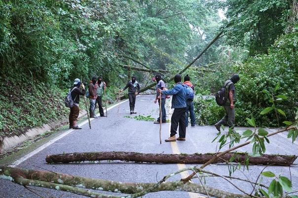 A hasty blockade of cut down trees on the road.