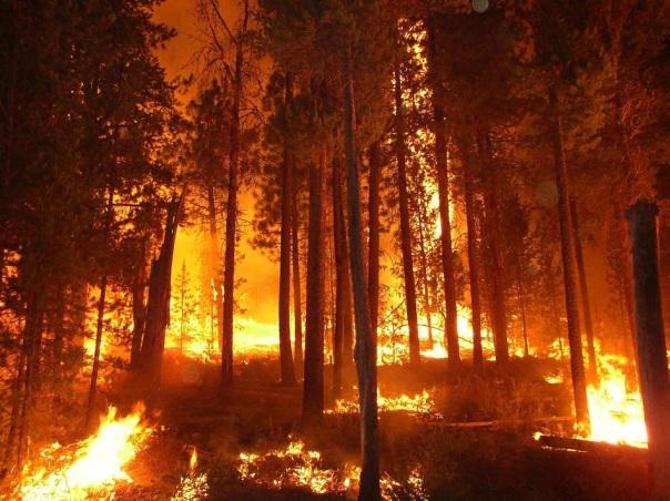 Forest fire kelowna 1