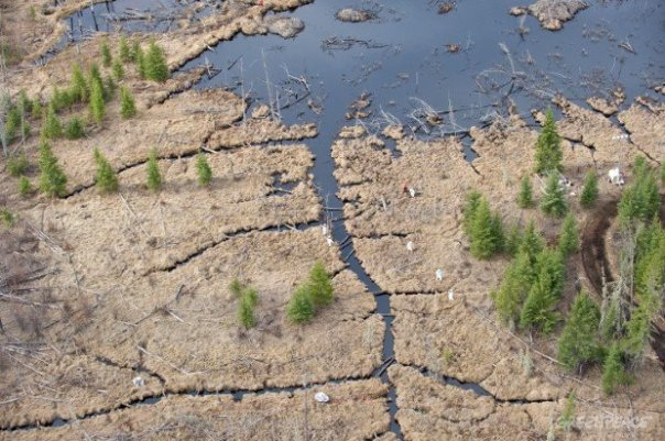 Oil spreading through muskeg from Nexen Energy pipeline spill, July 16, 2015.