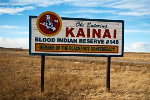 Blood Kainai-reserve