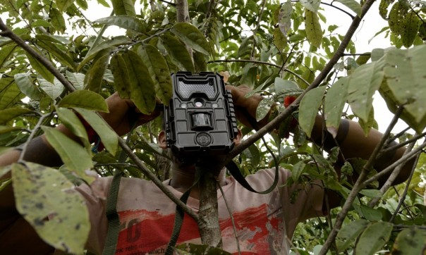 A Ka'apor Indian sets up a trap camera in an area used by illegal loggers. Photograph: Lunae Parracho/Greenpeace