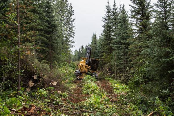 Pipeline workers are actively clearing the centreline for the Chevron - Pacific Trail Pipeline two kilometers from Unist'ot'en Camp. August 2015.