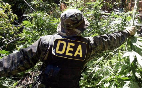 File photo of DEA agents conducting raid.