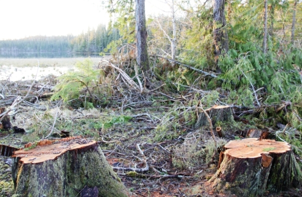 Three companies, one owned by Haida, have each been found guilty of 20 counts of damaging fish habitat in the Mallard Creek area on Graham Island. Photograph by: Fisheries and Oceans Canada