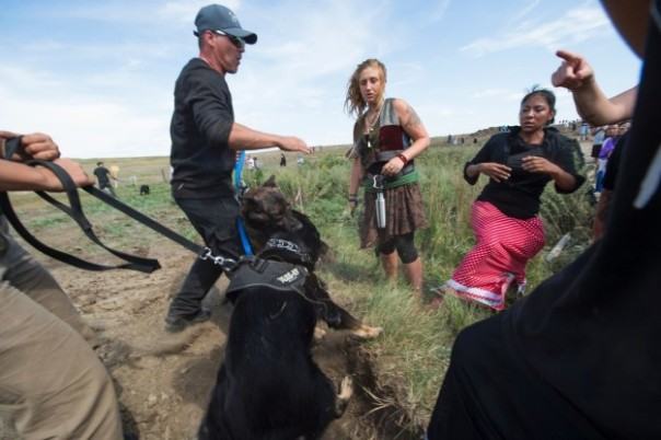 Dakota Access Pipeline dog confrontation