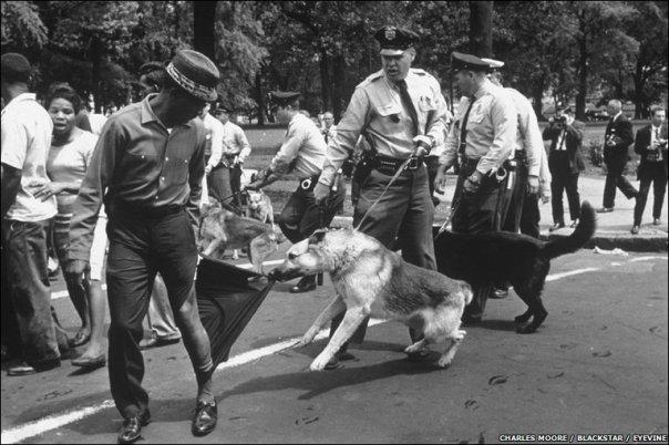 Police_dog_attack 3