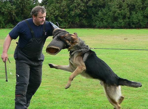 Police_dog_attack 4