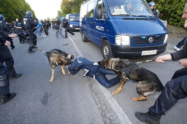 Police_dog_attack 5