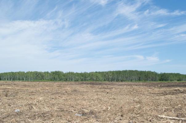 Winnipeg blockade logging 2