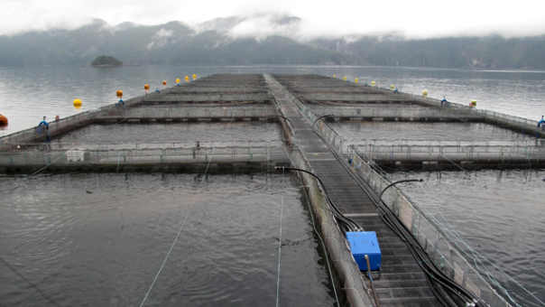 fish farm bc coast