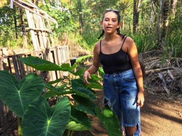 Hawaii Coco Palms occupation 1