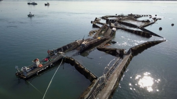 fish farm collapsed-net-pens