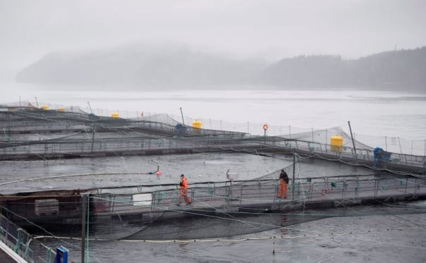 Fish farm nets rain